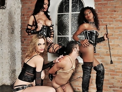 Several spectacular ts dommes are in bdsm action today. Ahead to the breathtaking boss bitches Adelaide Novaes, Cybelli Calmon with the addition of Jennifer Satine take total control of their submissive slave. These team a few take turns wrecking his mouth with the addition of pest in this intense hardcore domination scene.